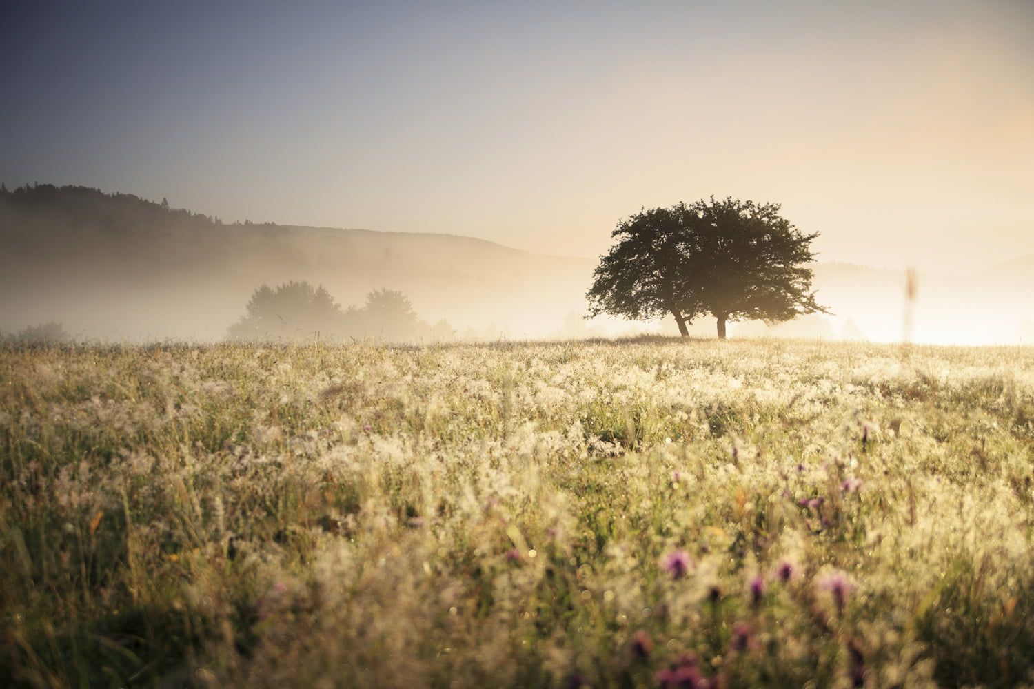 header_meadow_tree